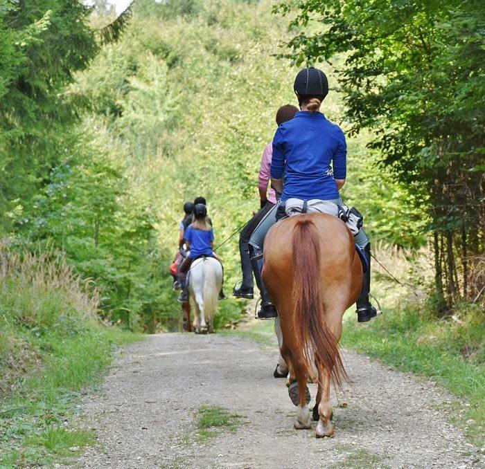 Camping : Réalisez des balades à cheval vers Lyon ! Camping : Réalisez des balades à cheval vers Lyon !