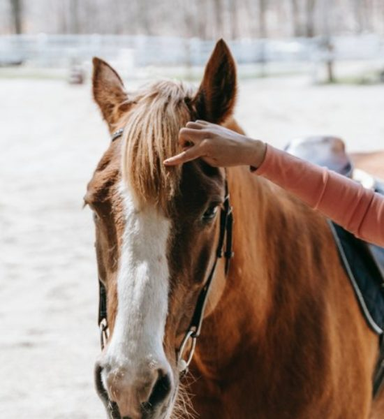 Balade à cheval vers Sisteron (04) et halte au camping de Montéglin